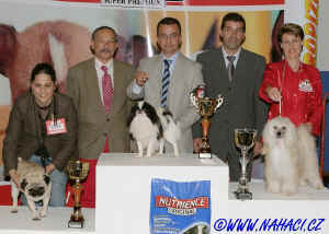 BIG IX. - res. BIG Chinese Crested Dog Ich. CODY z Haliparku, owner L. Brychtová,  judge: F.M. Rodrigues, PT