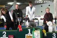 Ch. Oliver Modrý květ - BEST IN GROUP Lausanne 2007 - CACIB all breeds show !